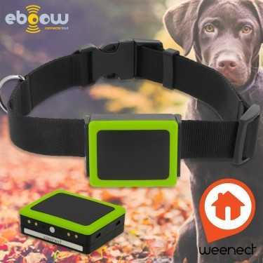Weenect Pets balise GPS pour chien